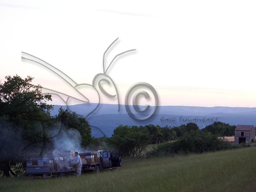 In the early morning, a beekeeper prepare his hives for unloading and sets them up near a lavender field in the Dr&ocirc;me.<br /> Au petit matin, un apiculteur pr&eacute;pare ses ruches pour les d&eacute;charger et les installer pr&egrave;s des champs de lavande dans la Dr&ocirc;me.