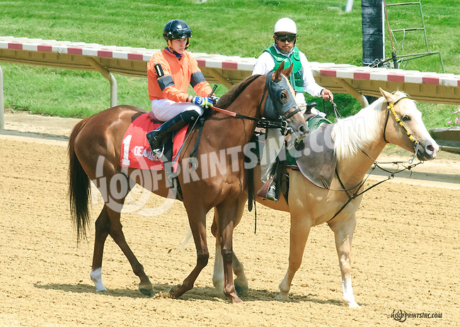 She's Ordained before The Dashing Beauty Stakes at Delaware Park on 7/11/15