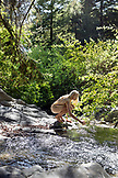 USA, California, Big Sur, Esalen, a woman puts her hand into Hot Springs Creek at the Esalen Institute