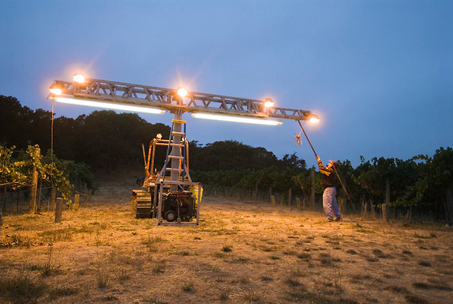 Lights assembled to guide workers picking grapes at night