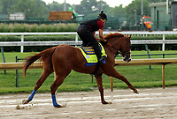 LOUISVILLE, KY -MAY 27: Kentucky Derby and Preakness winner Justify, with exercise rider Humberto Gomez, galloped at Churchill Downs, Louisville, Kentucky during a special training time for Belmont Stakes contenders. The track was muddy from an overnight rain. (Photo by Mary M. Meek/Eclipse Sportswire/Getty Images)