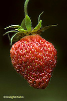 ST04-001b  Strawberry - Scott variety