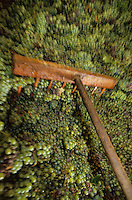 Europe/France/Champagne-Ardenne/51/Marne/Cramant: Vendange MUMM - Pressoir