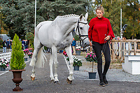 AUS-Isabel English presents Feldale Mouse during the CCI5*-L First Horse Inspection. Les 5 Etoiles de Pau. Pyrenees Atlantiques. France. Thursday 24 October. Copyright Photo: Libby Law Photography