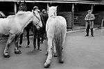 Southall weekly Wednesday Horse market London 1983. My ref 29/4458/,1983,