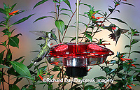 01162-093.03 Ruby-throated Hummingbirds (Archilochus colubris) on Droll Yankees Little Flyer-2 Hummingbird Feeder Shelby Co. IL