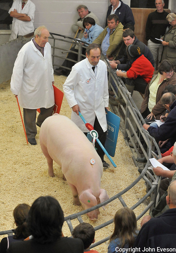 Welsh boar Vinery Emeror selling for 500 gns.