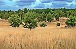 Kaszubski krajobraz
