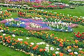Luiz, FLOWERS, photos, BRLH8683,#f# Blumen, Natur, flores, naturaleza