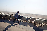 A shepherd herds his sheep along the road between the airport and the city center on Thursday, October 21, 2010 in Basrah, Iraq.