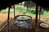 A-Ukre Village, Brazil. Manioc (Manihot esculenta, mandioca or cassava) cooking in a large pan over an open fire. Xingu.