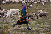 Bovanenkovo ,Yamal Peninsula, Russia, 09/07/2010..Woman members of the Nenets, indigenous nomadic reindeer herders, round up their 5,000 reindeer before heading north on sledges to the Russian Arctic coast..