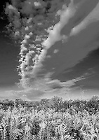 Billowing clouds fill the sky over Poverty Prairie at Waterfall Glen Forest Preserve, DuPage County, Illinois