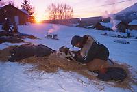 Vet Checks Tunheim's Dogs  Takotna 2000 Iditarod AK<br /> John O'Conner dog Pasvik