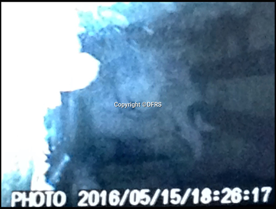 BNPS.co.uk (01202 558833)<br /> Pic: DFRS/BNPS<br /> <br /> 'Snake eye' camera shot of the trapped cat.<br /> <br /> A cat that got stuck behind a wall for 24 hours had to be rescued by firefighters with a special camera used to find people trapped in collapsed buildings.<br /> <br /> The Dorset and Wiltshire crew used a snake-eye camera to locate the mischievous moggy so they could cut a hole in the wall and get it out.<br /> <br /> The pet was covered in dust and very thirsty after its ordeal but still had his nine lives intact.<br /> <br /> It got into the wall cavity through a water mains access under the stairs of a ground floor block of flats in Dorchester, Dorset, and climbed about 6ft up the void behind the wall before getting stuck.