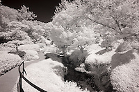 Fort Worth Botanical Garden in infrared