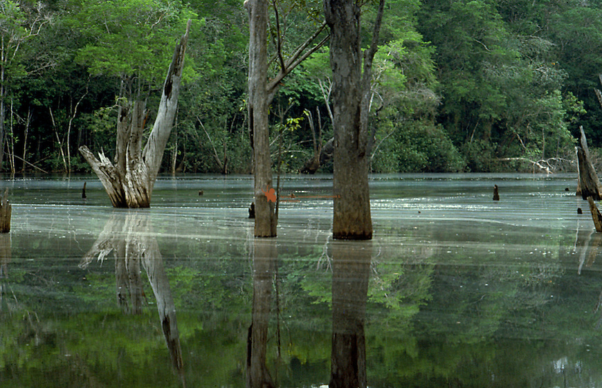 Flooded forest from  river Rio Negro