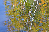 Birch and Fall Color Reflection are abstracted by the light water movement on Council Lake in the Hiawatha National Forest, Alger County, Michigan