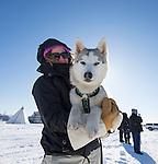 Beautiful sled dog at Long John Jamboree Yellowknife