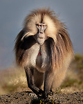 Ethiopia's Highland Wildlife