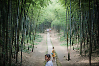 Bamboo Sea Forest