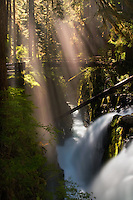 """MAGIC FOREST"" - Beautiful Sol Duc Falls after a late afternoon thunderstorm rolled through. Olympic National Park, WA."
