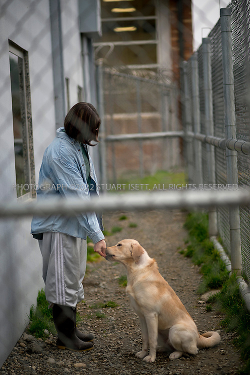 1/16/2014--Gig Harbor, WA, USA<br /> <br /> The prison pet partnership at the Washington Corrections Center For Women in Gig Harbor, WASH. Here Alyssa Knight, 31, helps train a new dog that has arrived at the program to be trained asa  service animal.<br /> <br /> For years now, U.S. prisons have enjoyed success bonding incarcerated felons with &ldquo;difficult&rdquo; dogs, many of them abandoned and slated for euthanasia if they can&rsquo;t be placed in new homes. The lucky ones go to jail, where inmates teach them to behave while the dogs, corrections experts believe, build their handlers&rsquo; own self-esteem as they become more adept in dog training. Top Dogs often become service pets, donated free of charge to programs assisting the blind and disabled. The rest become &ldquo;parole pets,&rdquo; offered to anyone ready to provide a good home. Human offenders who graduate from such programs often find post-incarceration work in dog care on the outside.<br /> <br /> One prison with a Prison Pet Partnership Program is the Washington Corrections Center For Women in Gig Harbor. Gig Harbor has gotten so good training dogs&mdash;and cats, housed in a separate wing of the facility&mdash;the pet program incorporated as a non-profit to offer its services to &ldquo;civilian&rdquo; animals on the outside. The kennel is built for 28 dogs, but often holds as many as 40 pets, as some owners are willing to have their darlings &ldquo;double up&rdquo; in cells because the service is so good. And so cheap: $19 per pet per day, better than any alternative nearby<br /> <br /> <br /> Photograph by Stuart Isett for The Wall Street Journal<br /> Slug: CONDOG <br /> &copy;2014 Stuart Isett. All rights reserved.