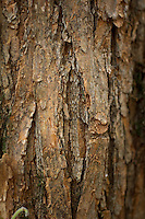 Close up photo of the bark on the side of a tree.