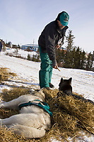 Wayne Curtis gives his dogs a dog bone as they rest in Koyuk on Friday during Iditarod 2008