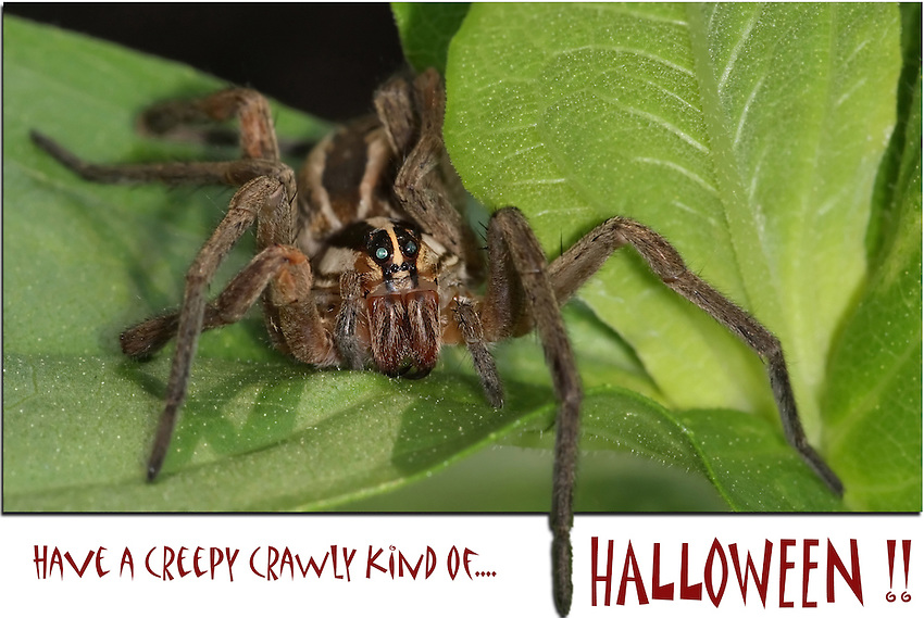 """Creepy Crawly"" Halloween card/poster."