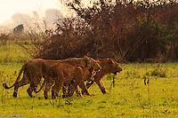 Africa, Uganda , Queen Elisabeth park