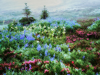 Field of various wildflowers and fog. Mt. Rainier National Park, Washington