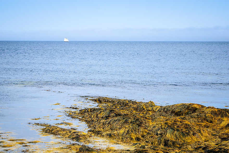 A lone sailboat on the horizon with shoreline of The Ovens, Nova Scotia, in the foreground
