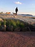 The author and his dogs on a coastal walk in Vinalhaven over pink granite.<br /> <br /> Photo:  Moira Trachtenberg