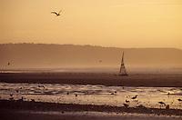 Europe/France/Normandie/Basse-Normandie/14/Calvados/Deauville: Char à voile sur la plage