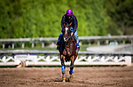 OCT 24: Breeders' Cup Distaff entrant Paradise Woods, trained by John A. Shirreffs,  gallops at Santa Anita Park in Arcadia, California on Oct 24, 2019. Evers/Eclipse Sportswire/Breeders' Cup