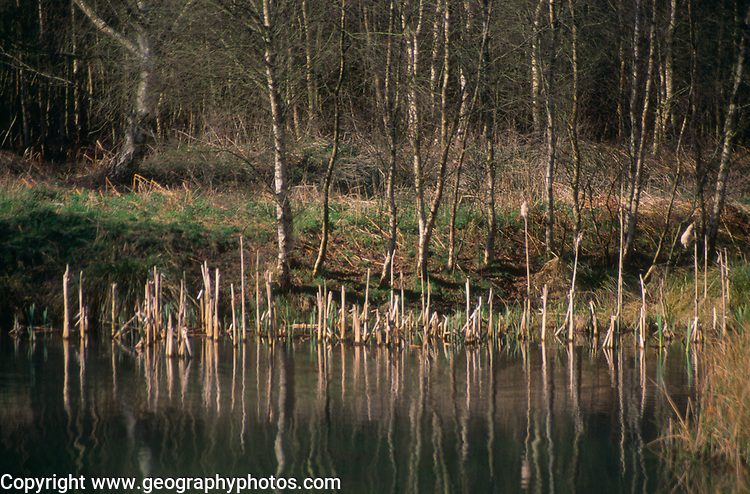 ADD3G0 Wetland pond on River Tang, Tangham, Suffolk, England