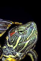 Turtle Variety