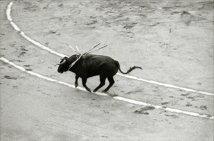 A bullfight in Barcelona, Spain. <br />