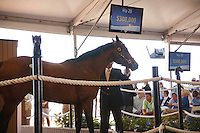 #28 Hip #28, a black colt, sired by Indian Charlie, foaled in Kentucky and consigned by Wavertree Stables, during the Fasig-Tipton Florida Sale at the Palm Meadows Training Center in Boynton Beach, Florida on March 26, 2012.The final sale price was $300,000. Arron Haggart/Eclipse Sportswire.