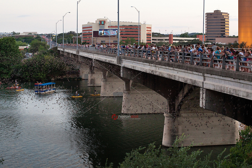 The bat, bats, mexican free-tailed bats, austin, texas, fly, flight, in downtown Austin is the spring and summer home to some 750,000 bats with up to 1.5 million bats at the peak of the bat-watching season. It's the largest urban bat colony in North America.