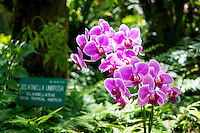 Purple orchids in the sunlight at Hawaii Tropical Botanical Garden, Papa'ikou, Big Island of Hawaiʻi.