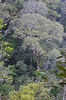 Summit Trail<br /> <br /> Kinabalu Park<br /> <br /> Sabah, Malaysia, Borneo