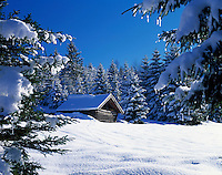 Germany, Bavaria, Upper Bavaria, Werdenfelser Land: Winter scenery with haystack