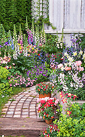 Romantic cottage garden, aquilegia columbine, dianthus, digitalis foxglove, antirrhinum snapdragons, Alchemilla, stone pathway, house window,