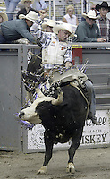 29 Aug 2004: Bull Rider Jerry Shephard 2nd ranked in the world rides the bull Sling Shot during the PRCA 2004 Extreme Bulls competition in Bremerton, WA.
