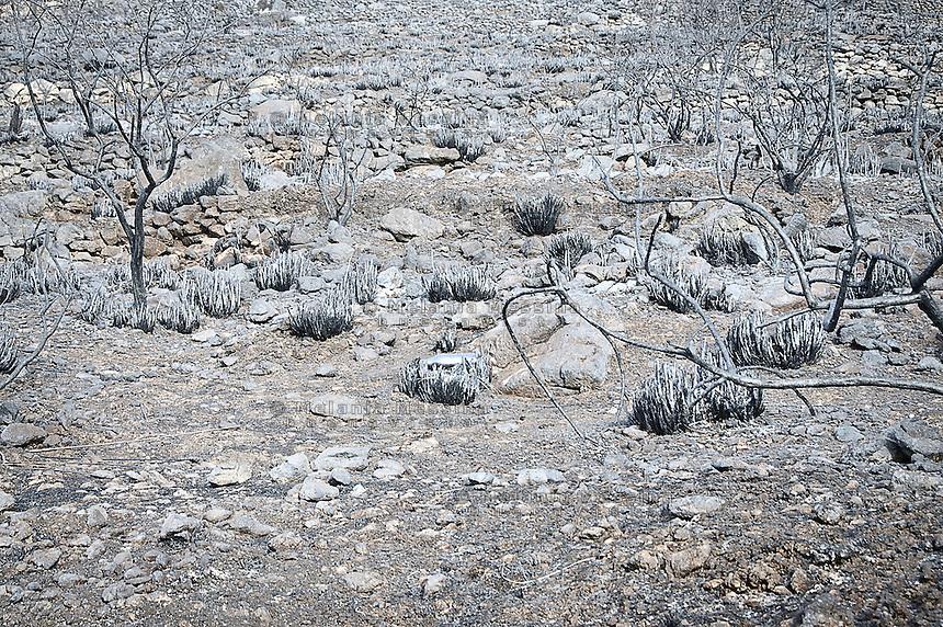La riserva naturale di Capo Gallo devastata dall'incendio quasi certamente doloso del 16 giugno, <br /> The nature reserve of Capo Gallo In Sicily destroyed by an arson,