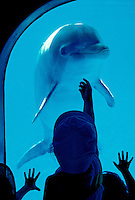 Children wave at dolphin. Sea Life Park, east coast Oahu