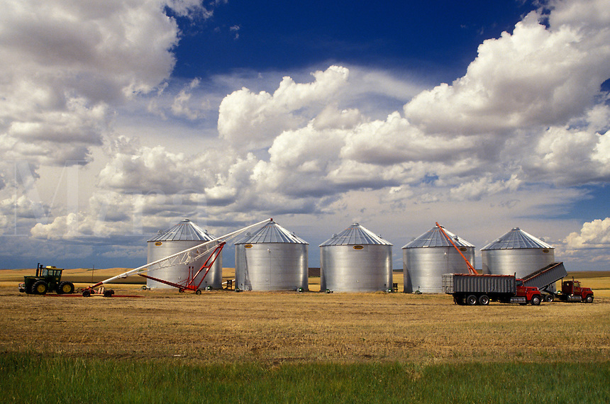 silos, farm, SD, South Dakota, Harvesting grain on a farm with farm machinery.