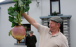 Weighing over a whopping 7kilos Patsy Herlihy from Gallaun, Killarney pictured with a giant turnip that he grew in his garden this week.<br /> Picture by Don MacMonagle